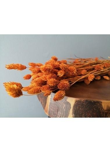 Kuru Çiçek Deposu Kuru Çiçek Kuş Otu (Palaris Otu) Turuncu Oranj
